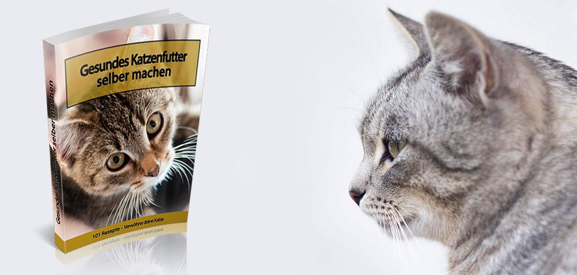 Gesundes Katzenfutter selber machen
