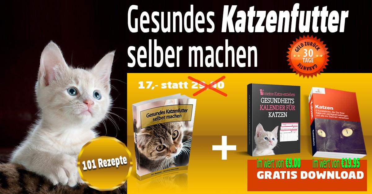 Gesundes Katzenfutter selber machen sagross-bazar.de
