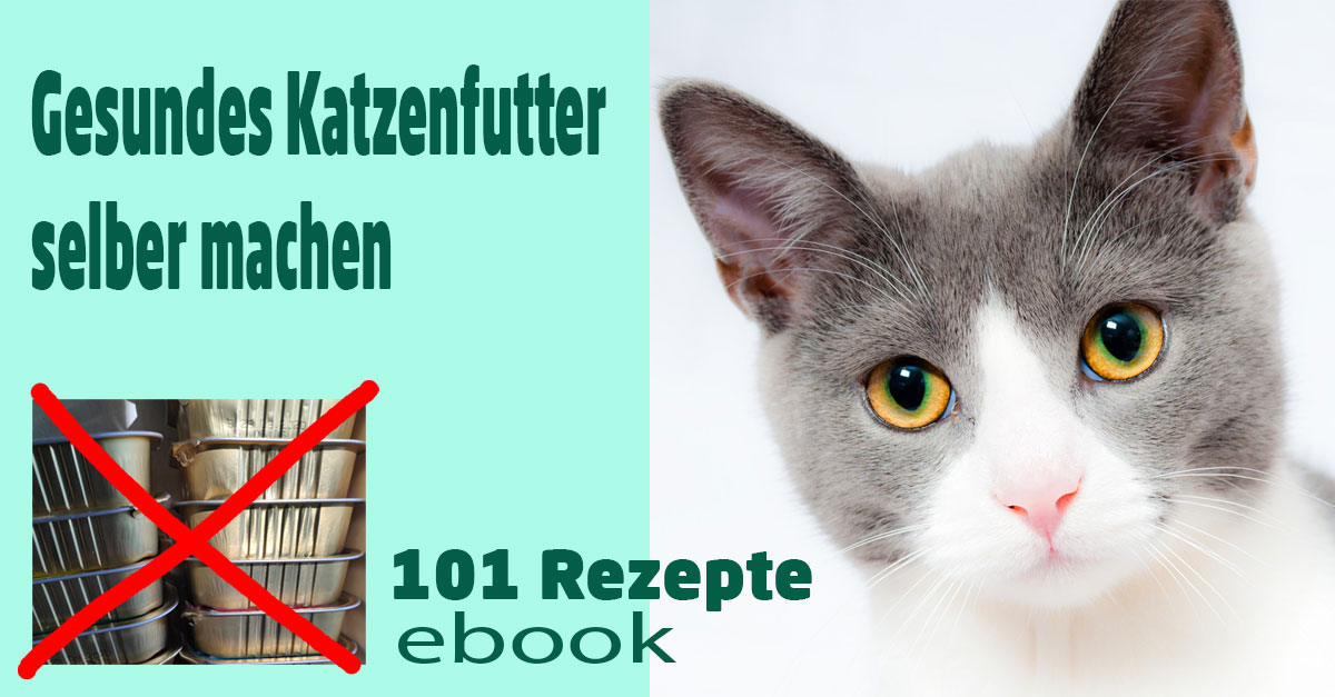 DIY - Gesundes Katzenfutter selber machen